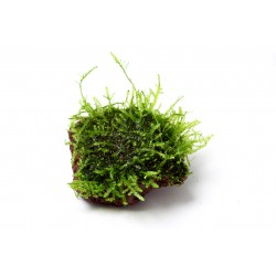 Dennerle Nano Stone with Java Moss