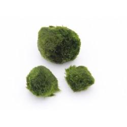 Nano Moss Balls (5 pcs) Aegagropila linnaei Dennerle