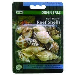 Dennerle Reef Shells - Decoration Hermit Crabs