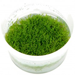 Tropica Riccia fluitans 1-2-GROW