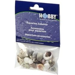 Hobby Sea Shells Small