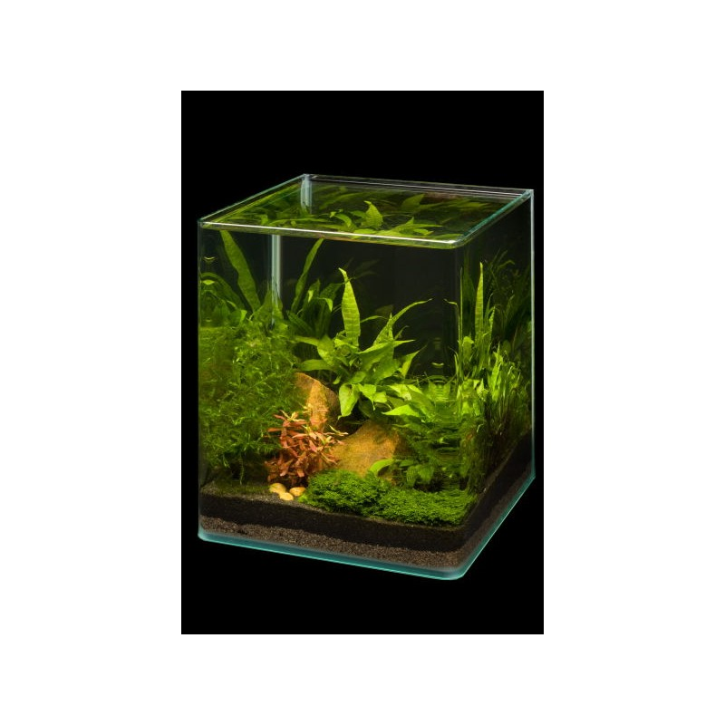 Dennerle nano cube 20l aquarium shrimp tank pro shrimp uk for Aquarium boule 20 litres