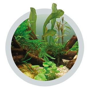 Ferro for green aquarium plants