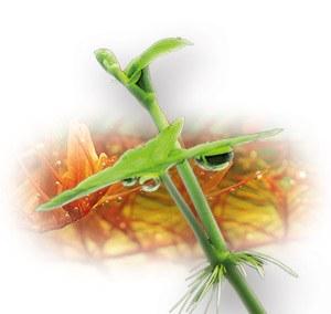 ProFito plant food for aquariums