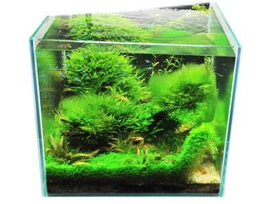 Easy life algexit 250ml aquarium fish tank green brown for Fish tank algae remover