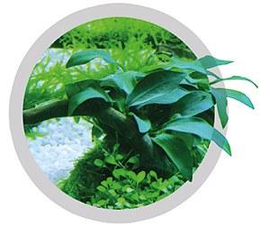 EasyCarbo plant liquid CO2