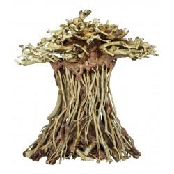 Bonsai Driftwood Mushroom S 14x12x15cm