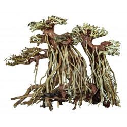 Bonsai Driftwood Twin Tree S 20x11x15cm