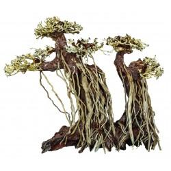 Bonsai Driftwood Twin Tree L 30x17x27cm