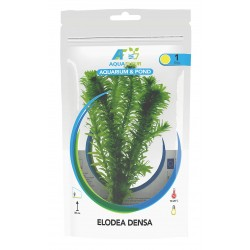 Elodea densa (Anacharis) Aquafleur