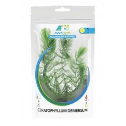 Ceratophyllum demersum Hornwort Aquafleur