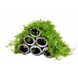 Deco Shrimp Tubes with Moss Aquafleur