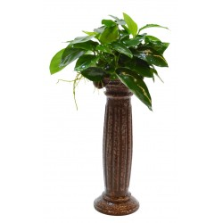 Deco Column with Anubias Aquafleur