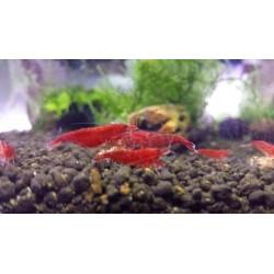 Bloody Mary Shrimp