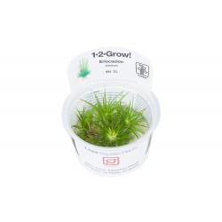 Tropica Eriocaulon cinereum 1-2-GROW