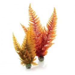 biOrb Aquatic Autumn Fern Plant Pack 28cm