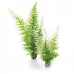 biOrb Aquatic Winter Fern Plant Pack 28cm