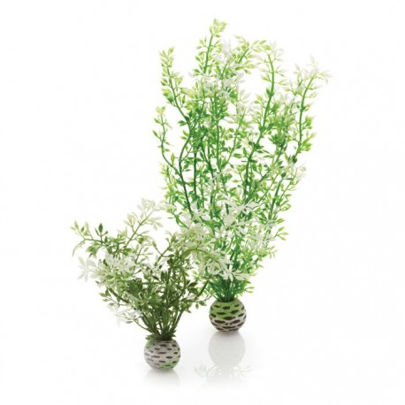 biOrb Aquatic Winter Flower Plant Pack 30cm