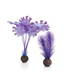 biOrb Purple Kelp Plant Pack Small 20cm