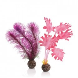 biOrb Pink Kelp Plant Pack Small 20cm