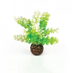 biOrb Green Feather Fern Pack Small 20cm