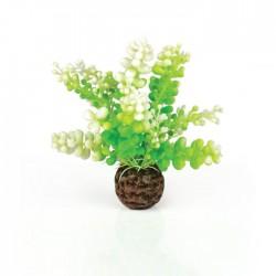 biOrb Green Caulerpa 13cm