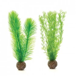 biOrb Green Feather Fern Pack 20cm