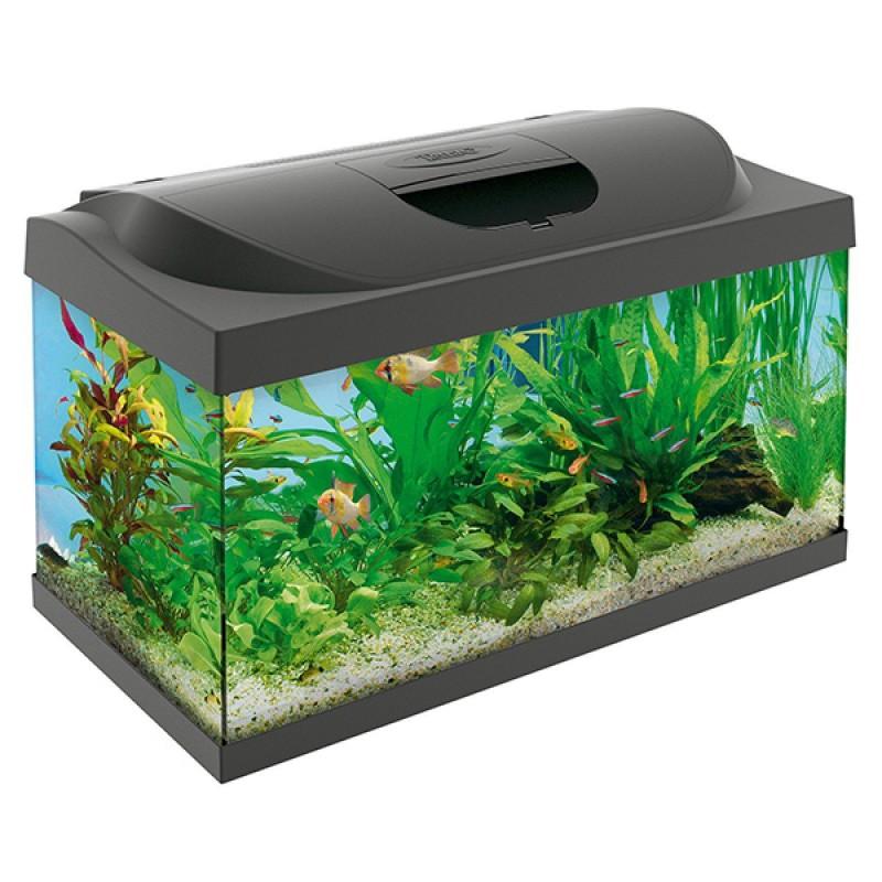 Aquarium 54l Aquarien Fische & Aquarien