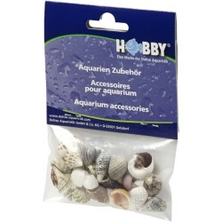 Hobby Sea Shells Small