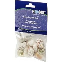 Hobby Sea Shells Medium (10 pcs)