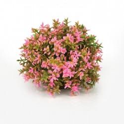 biOrb Topiary Ball Pink