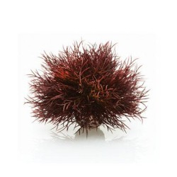 biOrb Sea Lily Crimson Aquarium Decoration
