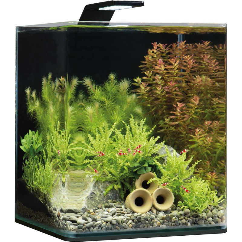 dennerle nano cube 20l basic style led aquarium set. Black Bedroom Furniture Sets. Home Design Ideas