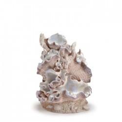 biOrb Clamshell Ornament Medium 19cm
