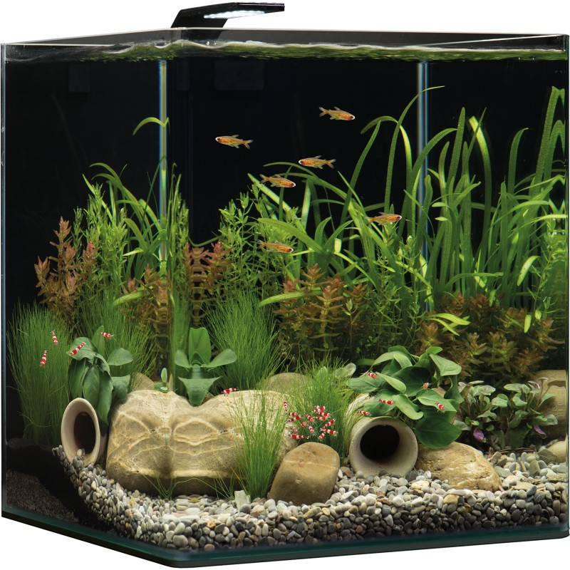 dennerle nano cube 60l complete plus aquarium set pro shrimp uk. Black Bedroom Furniture Sets. Home Design Ideas