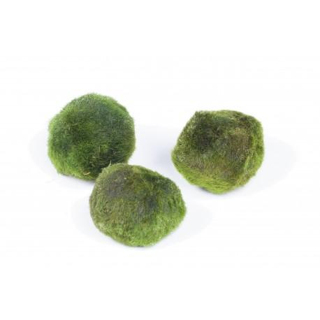 Cladophora aegagropila Moss Balls 3x Tropica