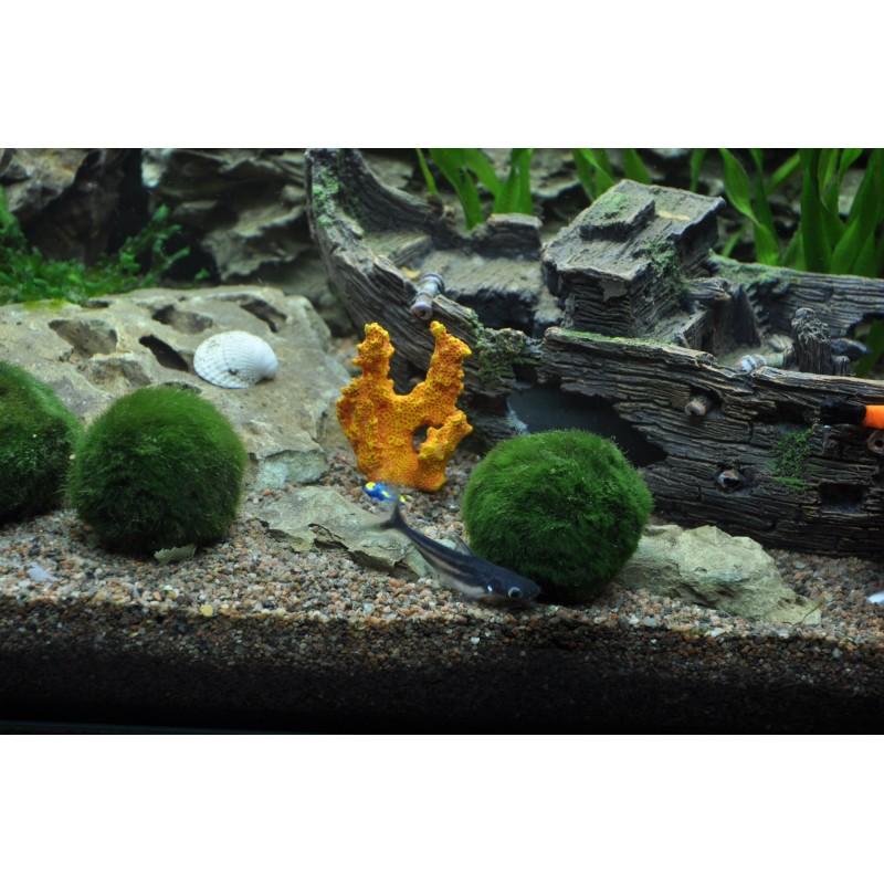 tropica moss balls cladophora aegagropila aquarium plant