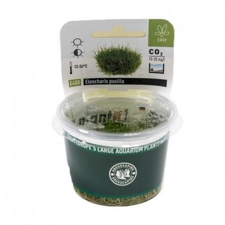 Eleocharis pusilla (in-vitro) Dennerle plant-it!