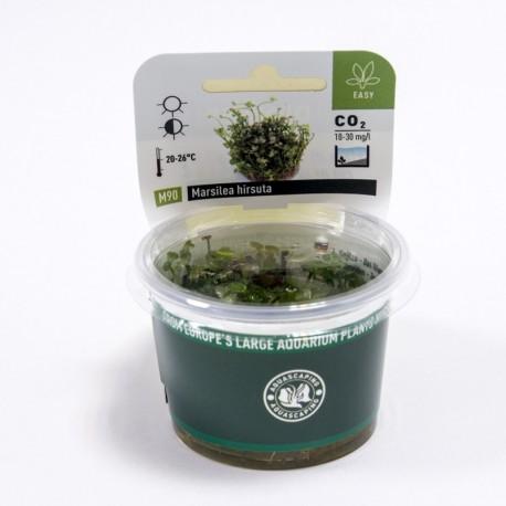 Marsilea hirsuta (in-vitro) Dennerle plant-it!