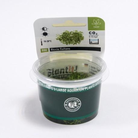 Riccia fluitans (in-vitro) Dennerle plant-it!