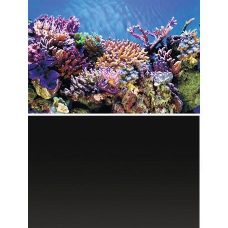 Superfish Deco Poster A1 60x30cm