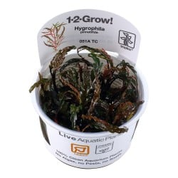Tropica Hygrophila pinnatifida 1-2-GROW