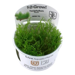 Tropica Taxiphyllum Flame Moss 1-2-GROW
