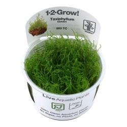 Tropica Taxiphyllum barbieri Java Moss 1-2-GROW