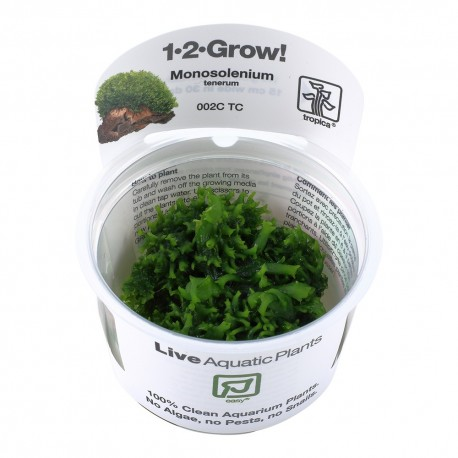 Tropica Monosolenium tenerum liverwort 1-2-GROW