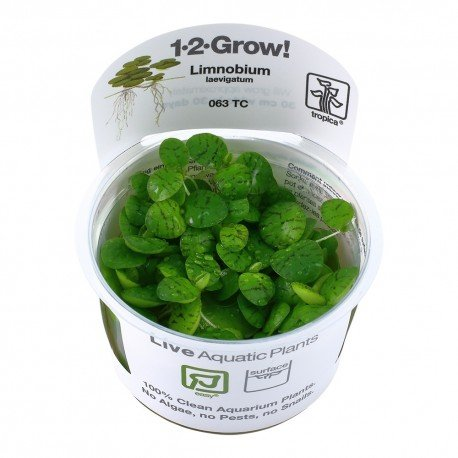 Tropica Limnobium laevigatum (Amazon Frogbit) 1-2-GROW