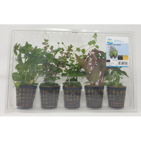 Aquafleur 5 Plant Combi Pack BASIC