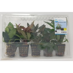 Aquafleur 5 Plant Combi Pack SPECIAL OFFER