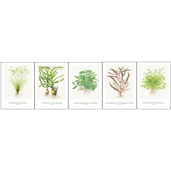 Tropica Art Cards 13x18cm SET 1 (5 Cards)