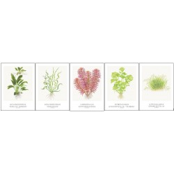 Tropica Art Cards 13x18cm SET 2 (5 Cards)